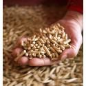 Levering van pellets in bulk met een vrachtwagen met blaassysteem