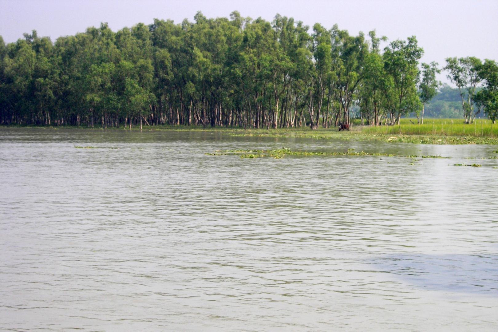08_sund-26e_mangrove_05_psd.jpg