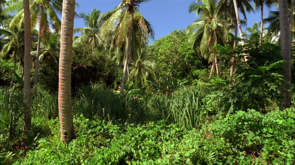 740780479-tonga-foret-tropicale-automne-